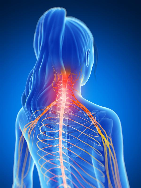 Die Nerven – Verbindung von Körper und Psyche « Vitametik Blog