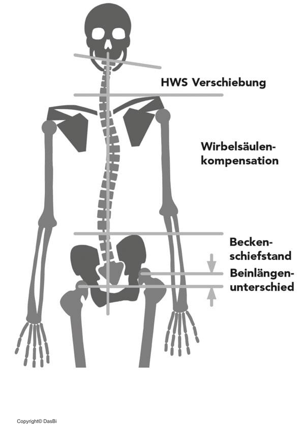 Charmant Ischiasnervenbahn Zeitgenössisch - Menschliche Anatomie ...